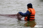 Ảnh: Công nhân ngâm mình trong nước lạnh dồn cá trước khi nạo vét Hồ Gươm