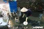 Anh: Ron lu Ha Noi thay doi khong ngo sau nua thang chim trong bien nuoc hinh anh 13
