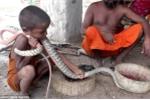 Nổi da gà clip trẻ em Ấn Độ ôm hôn, vuốt ve rắn hổ mang như đồ chơi