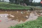 Video: Xác lợn chết trôi lềnh bềnh trên kênh giữa đợt dịch tả Châu Phi