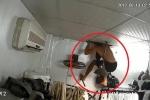 Đột nhập shop quần áo, trộm vô tình xoay camera làm lộ mánh thoát thân