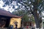 Cây sưa gần 50 tỷ khiến dân làng 'đổ máu' ở Bắc Ninh: Hai đại gia trả giá mua cây là ai?