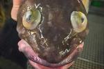 Xôn xao loạt ảnh cá kỳ quái như sinh vật ngoài hành tinh