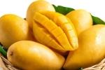Những loại trái cây bạn nên hạn chế ăn ngày nắng nóng