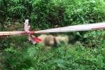 Người đàn ông chết với nhiều vết thương trong lô cao su ở Đồng Nai