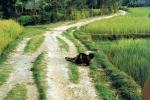 Thảm sát Mỹ Lai: Ký ức ám ảnh rõ ràng như những tấm ảnh màu chụp năm 1968