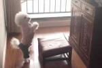 Clip chó cưng chắp tay 'cúng cụ' thu hút hàng triệu lượt xem