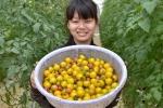 Nhà giàu đổ xô lên Kon Tum trồng thuốc quý, rau sạch