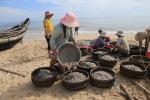 Sau bão số 2, ngư dân Huế thu tiền triệu mỗi sáng