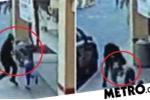 Clip: Cố chống trả tên cướp túi, 1 phụ nữ gốc Việt bị toán cướp lái xe tông chết ở Mỹ