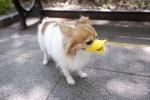 Chết cười với loạt mẫu thiết kế hài hước để 'rọ mõm' cho chó cưng