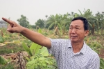 Côn đồ triệt hạ hàng nghìn cây chuối của dân: 7 đối tượng dương tính với ma túy