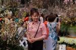 Video: Nghìn người chen chân chụp ảnh tại lễ hội hoa anh đào lớn nhất năm ở Hà Nội