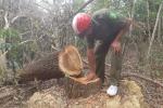 Điều tra vụ phá rừng quy mô lớn ở Đắk Lắk