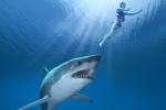 Đồ bơi giúp người tắm biển tránh bị cá mập tấn công