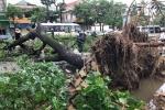 Bão số 2 đổ bộ, toàn tỉnh Nghệ An mất điện, hàng loạt cây xanh bị quật ngã