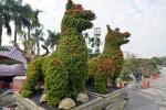 Cây cảnh hoa mẫu đơn hình chó, giá 350 triệu một cặp ở Hà Nội