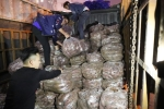 Tình nguyện viên giải cứu hàng trăm tấn khoai lang Nhật cho nông dân Gia Lai