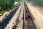 Video: Liều mình cứu con kẹt trên đường ray, gấu mẹ bị tàu hỏa cán chết