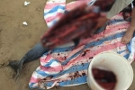 Cá heo trôi dạt vào bãi biển Đồ Sơn bị dân xẻ thịt