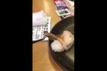 Video: Sự thật món sushi ngoe nguẩy trên bàn ăn Nhật Bản