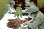Thuốc điều trị bệnh rối loạn chuyển hóa lipid và tiểu đường 'made in Vietnam'
