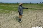Nắng nóng kéo dài, đồng ruộng ở Nghệ An khô hạn, nứt nẻ chưa từng thấy