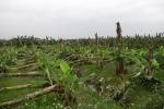 Nông dân Phú Thọ mất trắng hàng chục tỷ đồng chỉ sau 15 phút