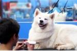 Giá đắt đỏ, dịch vụ chăm thú cưng vẫn hút khách dịp Tết
