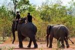 Đắk Lắk: Voi sẽ không được dùng để cưỡi trong các lễ hội