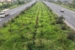 Video: Ngừng chi 53 tỷ mỗi năm cho cắt cỏ, đại lộ hiện đại nhất Việt Nam giờ ra sao?