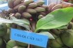 Thực hư về loại chuối đỏ lạ mắt có giá 300.000 đồng/kg