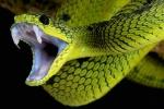 Sau mưa, rắn độc ồ ạt bò ra khỏi hang cắn người