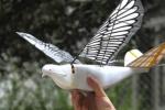 Trung Quốc phát triển thiết bị do thám mới mô phỏng chim bồ câu