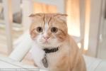 Bị mèo cào, chàng trai trẻ nhiễm vi khuẩn gây rối loạn cương dương