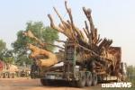 Đưa 3 cây đa khổng lồ lên xe chuẩn bị rời Huế