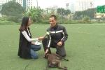 Chó Phú Quốc có phải giống chó thuần chủng của Việt Nam?