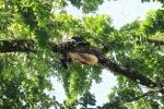Ly kỳ chuyện săn mật ong trong rừng già