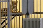 Bật máy sưởi giữ ấm cho động vật quý hiếm ở Vườn thú Hà Nội