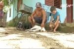 Chó mẹ nuôi dưỡng lợn con mồ côi như con đẻ