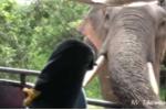 Kinh hoàng cảnh voi tấn công ôtô tìm thức ăn