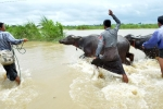 Video, Anh: Vo dap o Myanmar, hon 100 ngoi lang chim trong bien nuoc hinh anh 6