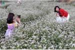 Ảnh: Du khách nô nức tạo dáng giữa rừng hoa tam giác mạch ở Lai Châu