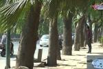 Sự thật bất ngờ dưới hàng xà cừ sắp bị đốn hạ trong ngày nắng nóng lịch sử ở Hà Nội