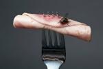 Đây là điều sẽ xảy ra, khi con ruồi mang theo mầm bệnh đậu vào thức ăn của bạn