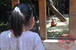 Du khách Trung Quốc ném đá chết kangaroo trong vườn thú