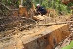 Để xảy ra phá rừng, Chủ tịch xã ở Quảng Nam bị kỷ luật khiển trách