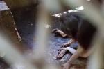 Nơi ngục tù của các loài động vật tại Củ Chi, TP.HCM