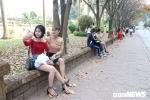 Anh: Con duong la vang ruc ro giua long Ha Noi hut hang nghin ban tre hinh anh 10