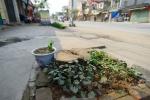 Thêm một huyện chặt cây xanh khi dẹp 'cướp' vỉa hè ở Hà Nội